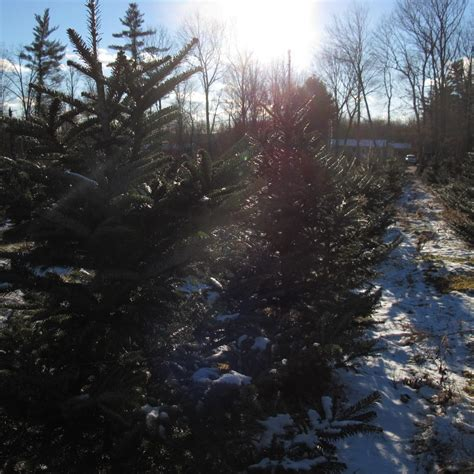 100 christmas tree farms nh guse christmas tree