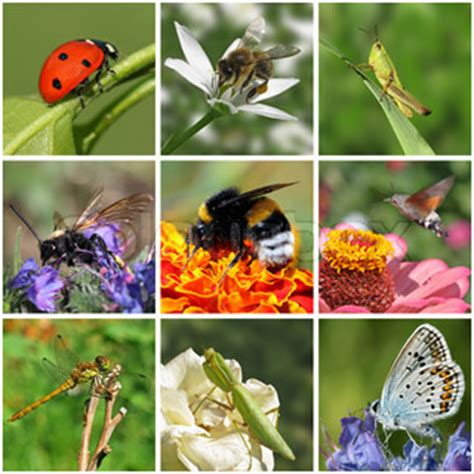 collage with macro photos of insects | stock photo | colourbox