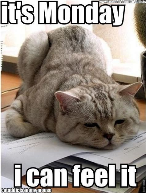 It S Monday Meme - it s monday funnyanimalslol funny or cute pet memes