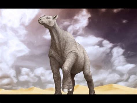 the biggest land mammal of the planet youtube
