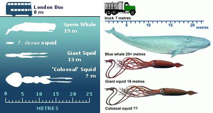 london bus v truck: colossal squid comparison war | flickr