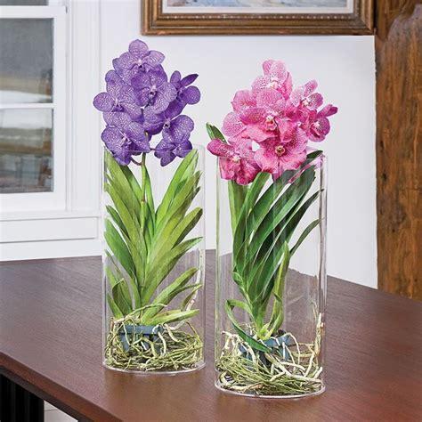 cura orchidee in vaso le orchidee vanda cura orchidea variet 224 orchidea