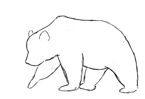 Cool Shape Outlines To Draw by The Gallery For Gt Grizzly Drawings Realistic