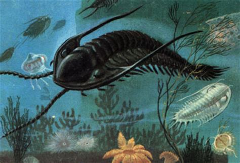 trilobites   cool dino facts wiki   fandom powered by wikia