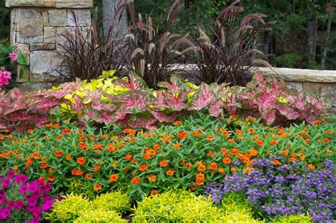 Landscape Flowers Flower Gardens In The South Landscape Atlanta By