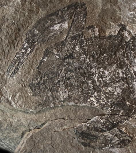 Fossil New exceptionally preserved jurassic sea found in new