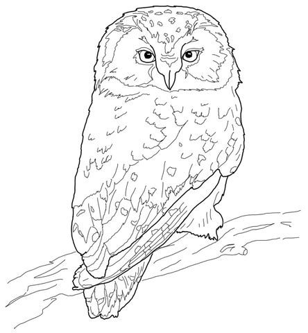 elf owl coloring page boreal owl coloring page supercoloring com