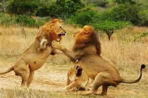 Lion Movie Watch Online watch free movie online full hd watch yoga hosers online