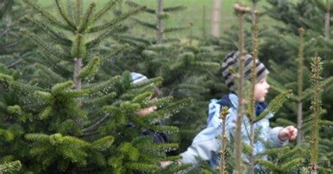 christbaum selber schlagen badisch christbaum selber schlagen agrar aktuell de