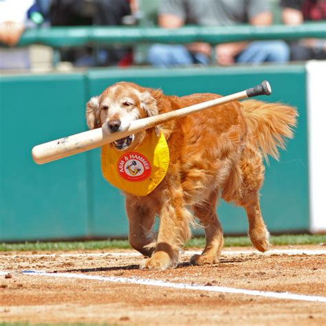 dogs baseball dogs in sports dogster