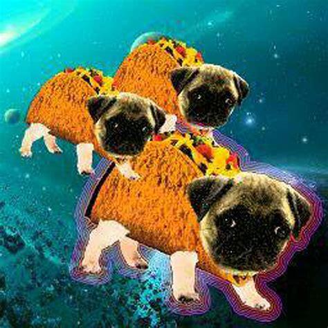 pug in taco costume pugcity pugcity