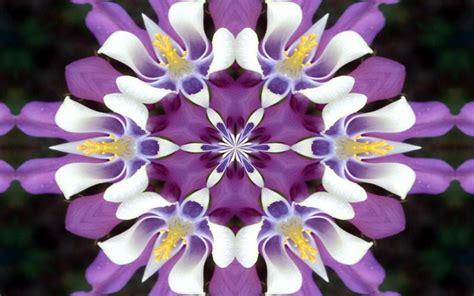 immagini fiori sfondo desktop fiori wallpaperart