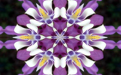 fiori sfondo sfondo desktop fiori wallpaperart