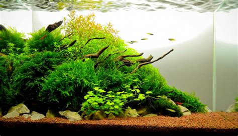 aquascape substrate the nature style planted tank aquascape awards
