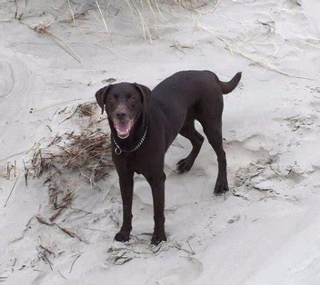 speelgoed hond die loopt en blaft aike herplaatst herplaatsing honden in nederland