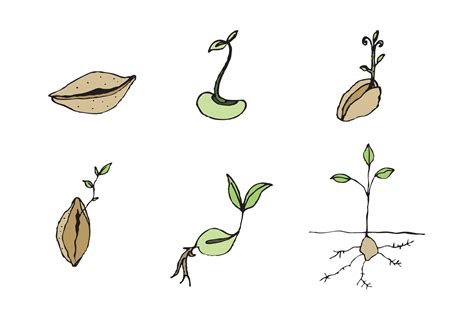 free seed vector series download free vector art stock