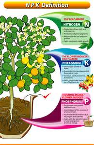 understanding npk fertilizers grab n grow