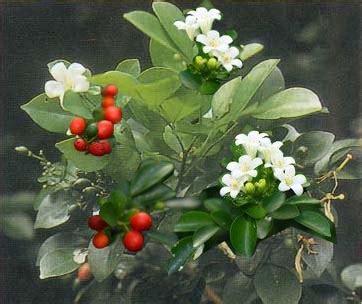 tanaman obat pola hidup sehat