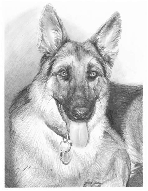 german shepherd drawing german shepherd drawing by mike theuer wetcanvas