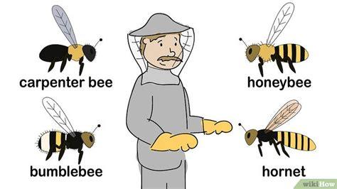 come allontanare le api dalle persiane come allontanare le api italia ai mondiali come davanti