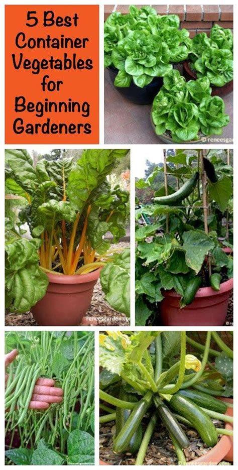 Vegetable Garden Tips And Tricks No Worries Container Gardening And Vegetables On