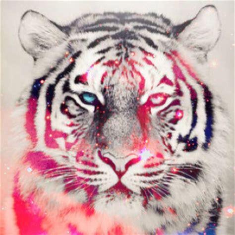 wallpaper tumblr tiger animal backgrounds galaxy hipster stars tiger tumblr