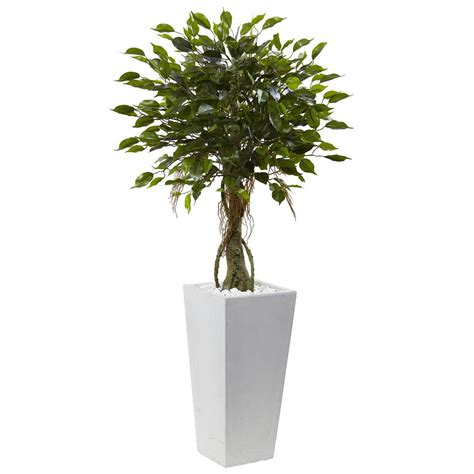 indoor tree planter nearly 5 5 ft ficus tree with bamboo planter 5924 the home depot