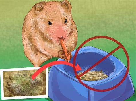 how to stop a s diarrhea how to treat diarrhea in hamsters 8 steps with pictures