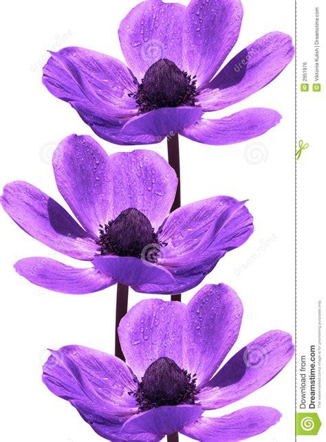 imagenes abstractas de flores flores violetas hermosas imagen de archivo libre de