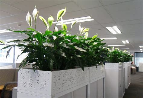 plants for office portfolio of interior plants and indoor landscapes in nh