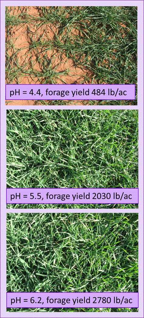 Weber State Mba Average Salary by Managing Wheat For Forage And Grain The Dual Purpose