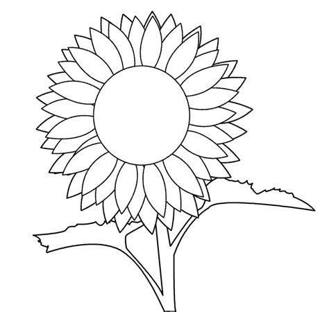 sunflower  art clipartsco