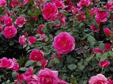 imagenes de flores naturales bonitas fotos de flores bonitas