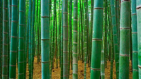 Bathroom Tile Sheets - bamboo zozeen