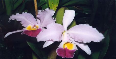 7 interesting facts about colombian orchids colombia 7 interesting facts about colombian orchids colombia
