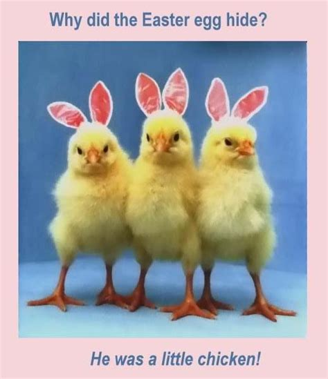 Cute Easter Meme - cute easter joke e forwards com funny emails