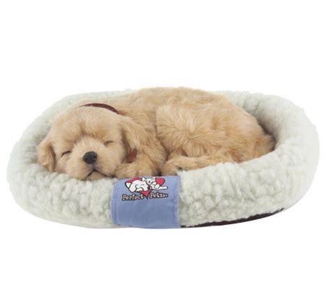 petzzz puppy petzzz lifelike breathing puppy or kitten qvc