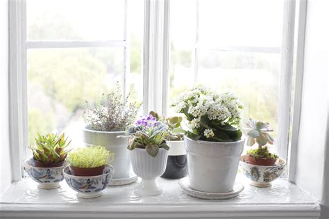 Window Sill Plants Decor Cozy Rental Apartment Decor Ideas Ideasdesign Interior Design And Architecture Ideasdesign