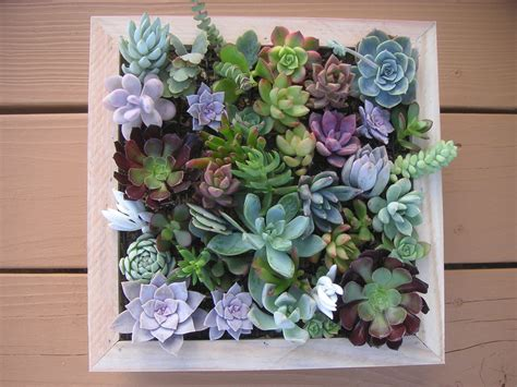 complete succulent wall art kit comes assembled with soil and