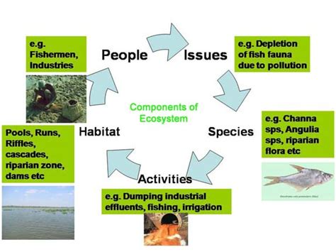 applied ecology conservation management wikibooks open