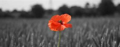 the story of the poppy the royal british legion