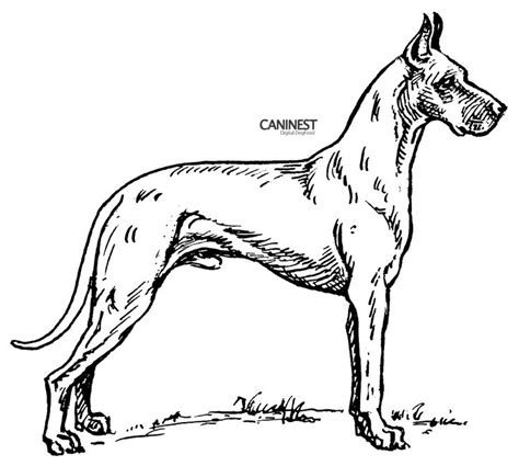 Dog Color Pages Printable Dog Breed Coloring Pages 2 Breed Coloring Pages