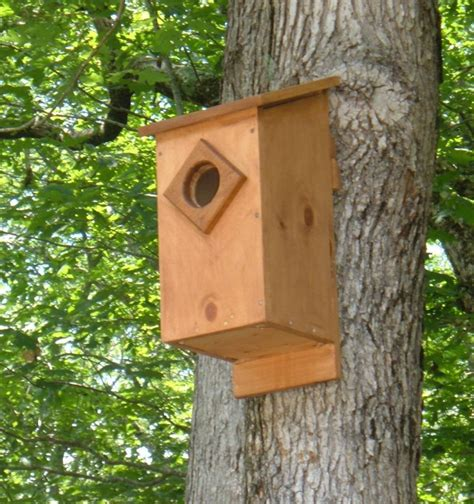 plans to build a house screech owl house plans how to build a screech owl box
