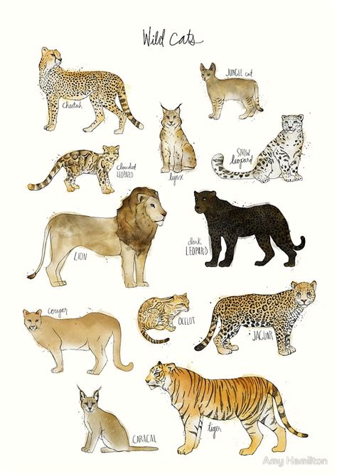 Cheetah Print Wall Stickers quot wild cats quot by amy hamilton redbubble