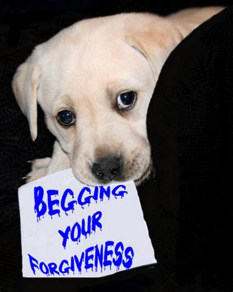 Ricci Begs For Fur Forgiveness begging your forgiveness greeting card for sale by galok
