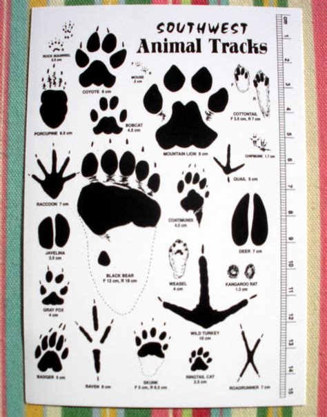 printable animal track cards april 2010 stopping by woods page 3