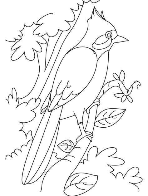 malakiah nightingale s creatures a colouring book by yhon dos santos creepy colouring books i like books nightingale perched on a branch coloring page