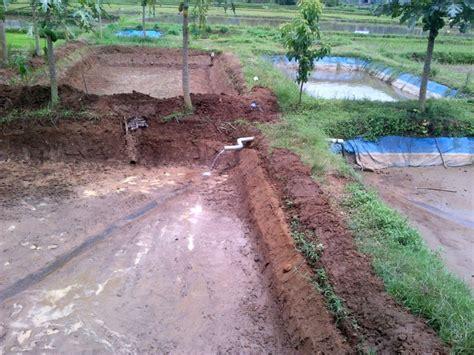 Ternak Lele Sangkuriang Cara 7 langkah mudah cepat panen ternak lele sangkuriang di