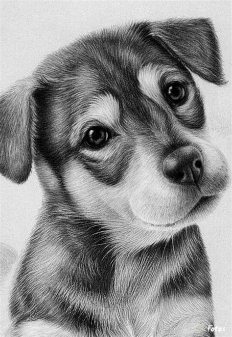 drawings of puppies 25 best ideas about pencil drawings on pencil drawings of nature pencil