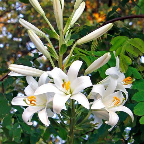 fiori a giugno in edicola dal 24 maggio casa in fiore di giugno cose di